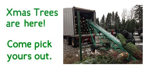Trees are here