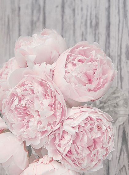Featured Flower Peonies Every Bloomin Thing